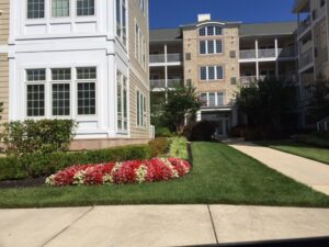 4 Great Elements to Add to Your Commercial Landscaping