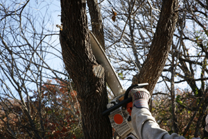 Commercial tree service company in maryland, delaware, pennsylvania, virginia