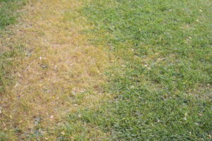 What is Snow Mold?