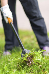 Getting Rid of Lawn Pests Like Weeds and Insects