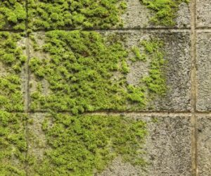 Get rid of moss with these tips!