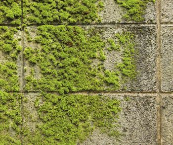 Charming Follow Our Moss Removal Tips To Restore Your Hardscaping To Its Natural  Beauty.