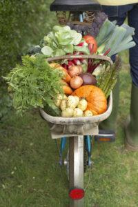 vegetable, garden