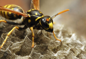 landscaping, wasps