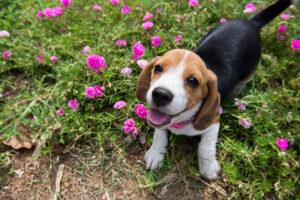 Tips for Keeping Your Pets Safe from Your Yard Work