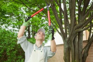 3 Frequent Commercial Tree Care Errors