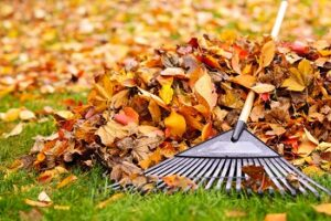 How to Rake Your Leaves More Quickly
