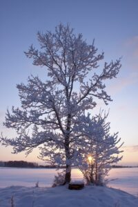 Caring for Your Trees in the Winter