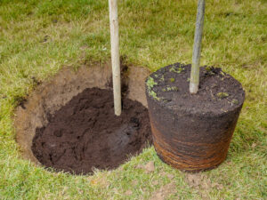 5 Mistakes to Avoid When Planting Trees
