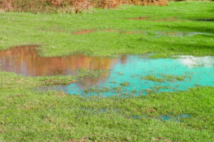 Landscaping to Prevent Flood Damage on Your Property