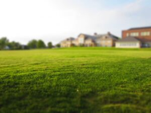 Grass Care Tips