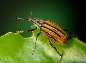 Insects that Can Harm Your Lawn and How to Get Rid of Them