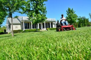 3 Great Benefits of Hiring a Professional Landscaper this Summer!