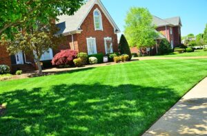 3 Easily Avoidable Lawn Care Mistakes