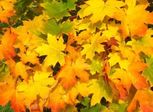 Important Fall Lawn Maintenance Tasks