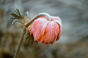 Keeping Your Outdoor Plants Safe from Freezing Temperatures