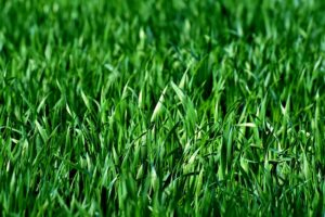 Why You Should Overseed Your Lawn