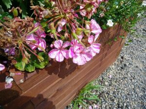 Tips for Cultivating Raised-Bed Gardens