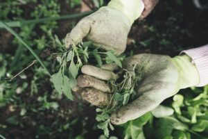 Dealing with an Outbreak of Weeds