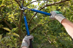 What Are The Benefits of Pruning Trees and Shrubs?