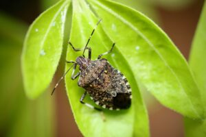 Spring is just around the corner, which means troublesome insects will soon return from hibernation. Here are a few natural landscaping tips to keep the bugs away.