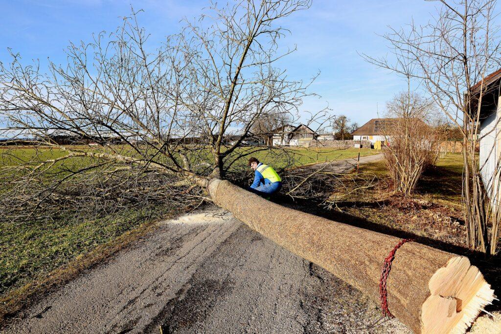 atlantic maintenance group tree removal
