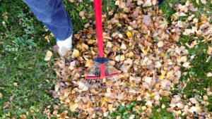 Leaf Removal Do's and Don'ts Atlantic Maintenance Group
